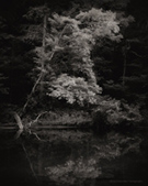 Photograph by Nicholas Bell, Riverbank Smoky Mountains, available from Zatista.com