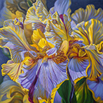 Painting of Iris Flower by Fiona Craig from Illinios