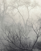 Artwork by Nicholas Bell, Winter Forest Composition, 2014, available from Zatista.com